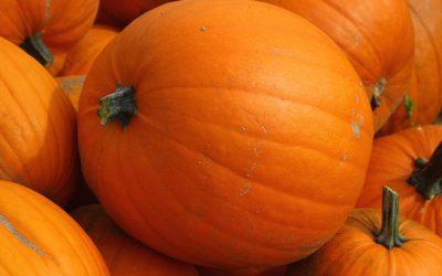 October Newsletter – Tips, Treats & Tricks